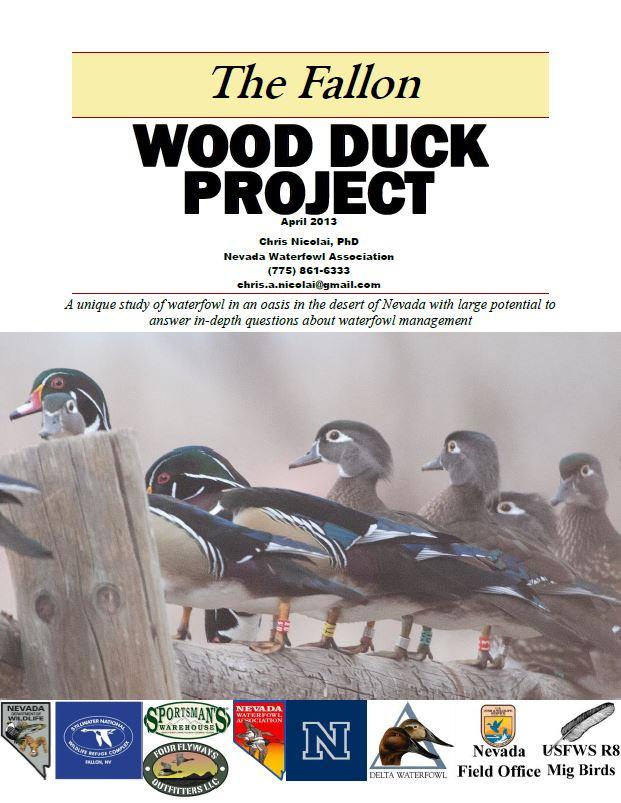 Wood Duck 20121